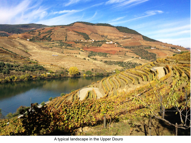 View of the Douro River and the terraced vinyards