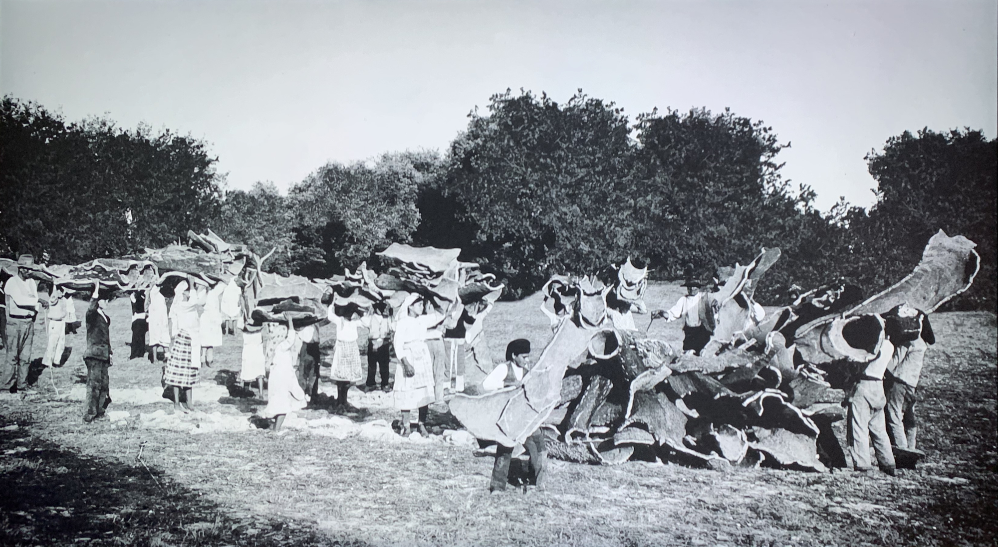 A historic photo showing villagers all engaged in the cork harvest