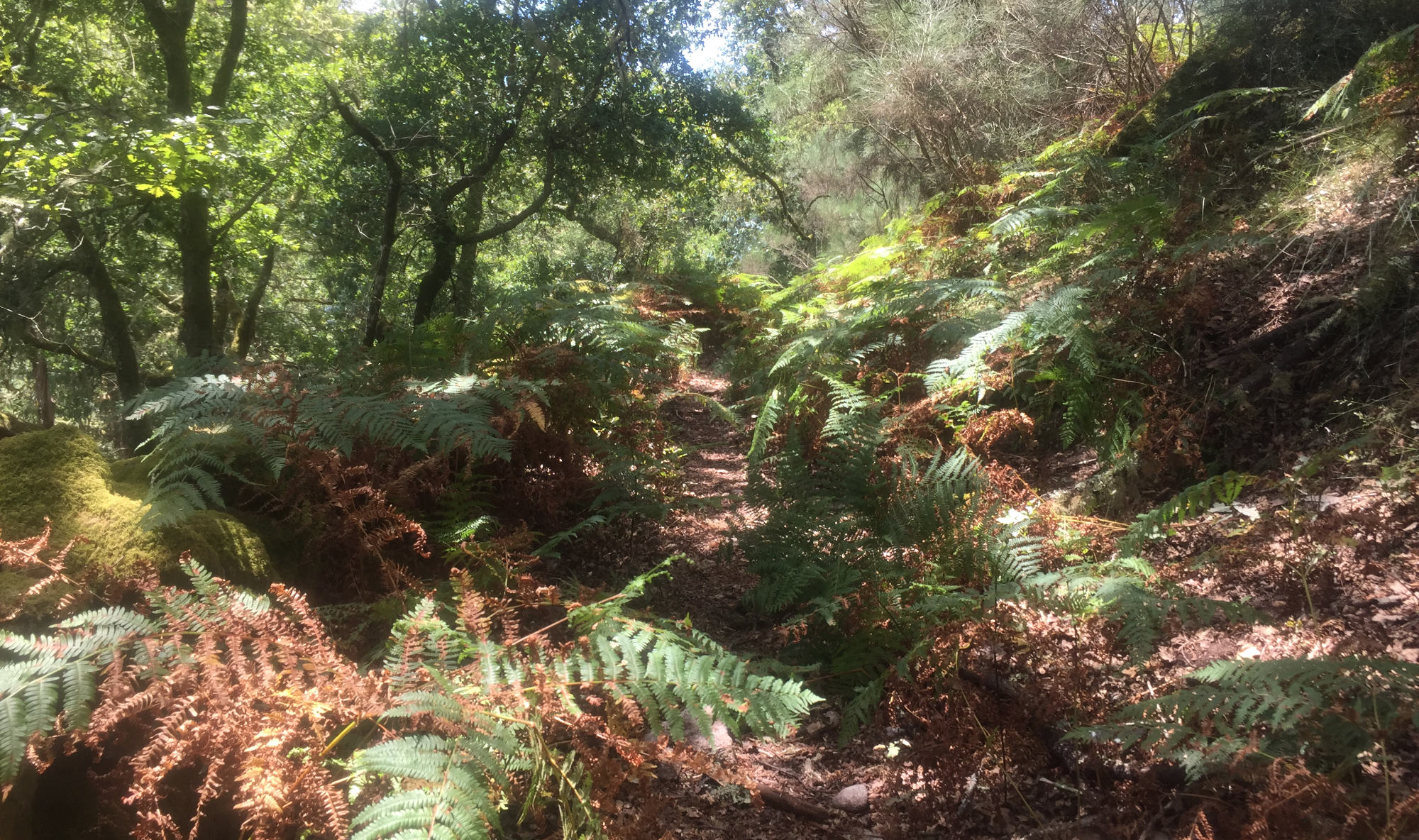 The trail becomes overgrown with bracken intruding on the path