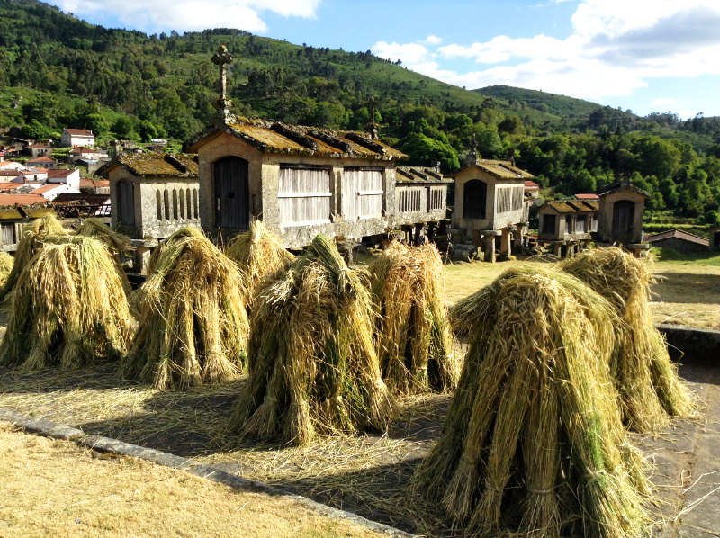 Group of stooks in Lindoso