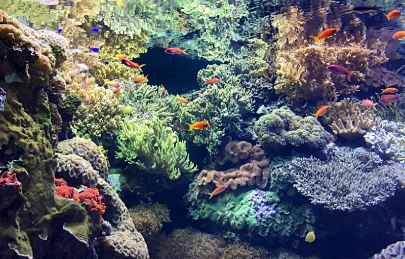 tropical reefs and colourful fish