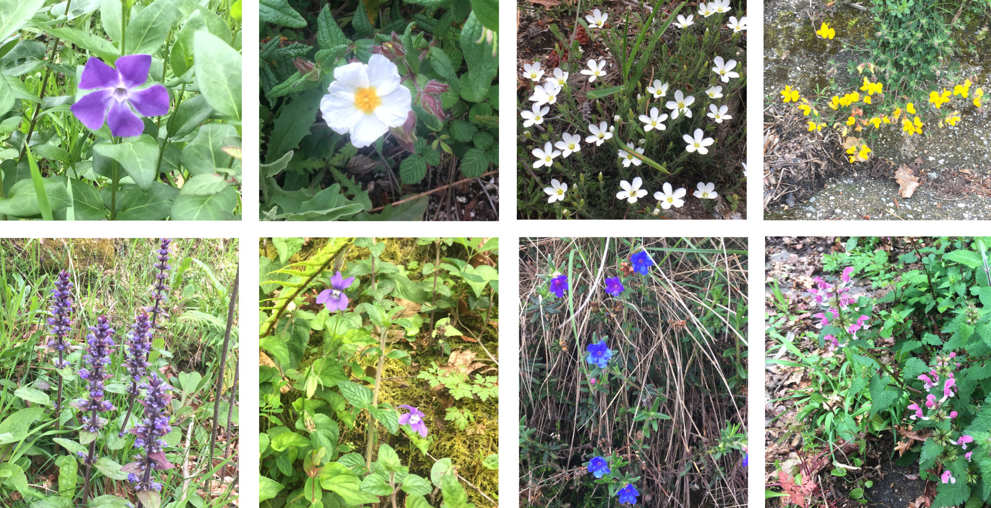 A collection of woodside wild flowers